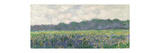 Field of Yellow Irises at Giverny, 1887 Giclee Print by Claude Monet