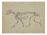 Lateral View of a Tiger Skeleton Giclee Print by George Stubbs