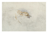 Study of a Crouching Fox, Facing Right Verso: Faint Sketch of Fox's Head and Tail Giclee Print by John Frederick Lewis