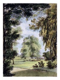 The Sister Trees, Kew Gardens, Plate 8 Giclee Print by George Ernest Papendiek