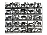 Collection of Animals (Woodcut) Giclee Print by  German