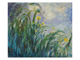 The Yellow Iris Giclee Print by Claude Monet