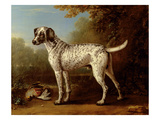 Grey Spotted Hound, 1738 (Oil on Canvas) Giclee Print by John Wootton