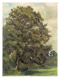Study of an Ash Tree, C.1851 (Oil on Paper on Panel) Giclee Print by Lionel Constable