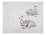 Studies of Young Pallah Deer Resting, C.1802 (W/C and Graphite on Paper) Impressão giclée por Samuel Daniell