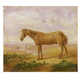 Old Billy, a Draught Horse, Aged 62 (Oil on Panel) Giclee Print by Charles Towne
