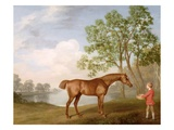 Pumpkin with a Stable-Lad, 1774 (Oil on Panel) Giclee Print by George Stubbs