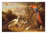 A Macaw, Ducks, Parrots and Other Birds in a Landscape, c.1708-10 Giclee Print by Jakob Bogdani Or Bogdany