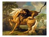 A Lion Attacking a Horse, C.1762 (Oil on Canvas) Giclée-Druck von George Stubbs