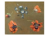 Poppies and Tradascanthus Giclee Print by  Swiss