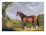 A Clydesdale Stallion, 1820 (Oil on Canvas) Giclee Print by John Frederick Herring Snr