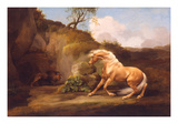 A Horse Frightened by a Lion, C.1790-5 (Oil on Canvas) Giclee Print by George Stubbs