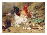 Hens Roosting with their Chickens Impression giclée par Eugene Remy Maes