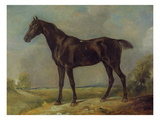 Golding Constable's Black Riding-Horse, C.1805-10 (Oil on Panel) Giclee Print by John Constable