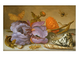 Still Life Depicting Flowers, Shells and Insects (Oil on Copper) (For Pair See 251378) Reproduction procédé giclée par Balthasar van der Ast