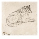 Arctic Dog, Facing Right (Pencil on Paper) Giclee Print by James Ward