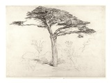 Old Cedar Tree in Botanic Garden, Chelsea, 1854 (Pencil on Paper) Impression giclée par Samuel Palmer