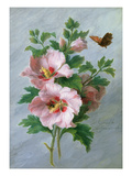 Hibiscus Against a Marble Ledge (Oil on Panel) Giclee Print by Cornelis van Spaendonck