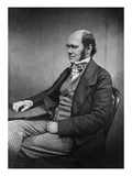 Charles Darwin (Engraving) Giclee Print by  Maull & Fox