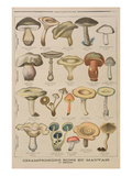 Good and Bad Mushrooms, Illustration from the Illustrated Supplement of Le Petit Journal Premium Giclee Print by  French