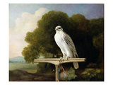 Greenland Falcon (Grey Falcon), 1780 (Oil on Panel) Giclee Print by George Stubbs