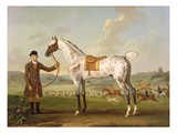 Scipio, Colonel Roche's Spotted Hunter, c.1750 Giclee Print by Thomas Spencer