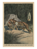 Tiger Attacking a British Officer, Back Cover Illustration from 'Le Petit Journal' Giclee Print by  French