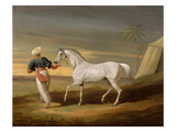 Signal, a Grey Arab, with a Groom in the Desert (Oil on Panel) Giclee Print by David of York Dalby