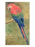 Red and Blue Macaw (W/C Heightened with White on Paper) Giclée-tryk af Henry Stacey Marks