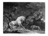 A Horse Affrighted by a Lion, Engraved by the Artist, 1777 (Etching) Giclee Print by George Stubbs