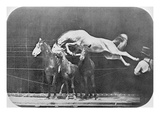 Jumping over Three Horses...Chestnut Horse Hornet Giclee Print by Eadweard Muybridge