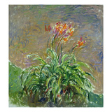 Hemerocallis, 1914-17 Giclee Print by Claude Monet