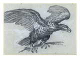 An Eagle, 1811 (Pencil on Paper) Giclee Print by Pierre-Paul Prud'hon
