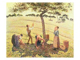 Apple Picking at Eragny-Sur-Epte, 1888 Giclee Print by Camille Pissarro