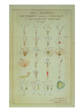 Illustration of the Linnean Plant Sexual System (Coloured Engraving) Giclee Print by Carl Linnaeus