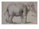 An Elephant, 1637 (Charcoal on Paper) Giclee Print by  Rembrandt van Rijn