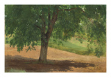 Study of Light and Shade (Oil on Card Laid Down on Canvas) Giclee Print by Rosa Bonheur