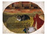 Catnap, 1858 Giclee Print by Rosa Brett