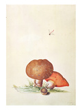 Cep Mushroom with Damsel Dragonfly Giclee Print by Georg Dionysius Ehret