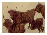Studies of Highland Cattle (Oil on Paper) Giclee Print by Richard Ansdell