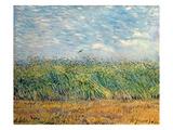 Wheatfield with Lark, 1887 Giclee-tryk i høj kvalitet af Vincent van Gogh