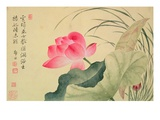 Lotus Flower, by Yun Shou-P'Ing (1633-90), from an 'Album of Flowers', (W/C on Silk Backed Paper) Giclée-Druck von  Yun Shouping