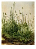 Great Piece of Turf - Study of Weeds, 1503 (W/C and Bodycolour on Vellum) Premium Giclee Print by Albrecht Dürer
