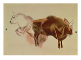 Copy of a Rock Painting of Two Bison from C.15000 BC (Pastel on Paper) Giclee Print by  English