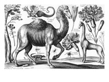 Animalium, Ferarum Et Bestiarum, Engraved by David Loggan, 1663 (Engraving) Lmina gicle por Wenceslaus Hollar