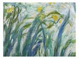 Yellow and Purple Irises, 1924-25 (Detail) Premium Giclee Print by Claude Monet