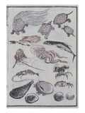 Undersea Creatures, from a Manga (Colour Woodblock Print) Giclee Print by Katsushika Hokusai