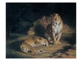 A Pair of Leopards, 1845 (Oil on Canvas) Giclee Print by William Huggins