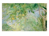 Orange Tree Branches, 1889 (Oil on Canvas) Giclee Print by Berthe Morisot
