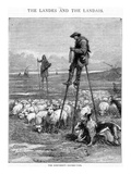 The Shepherd's Dinner-Time, Engraved by Charles Butterworth (Engraving) Giclee Print by Auguste Francois Laby